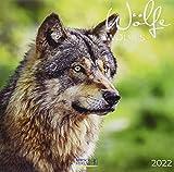Wölfe 2022: Broschürenkalender mit Ferienterminen. Fasziniernde Bilder von Wölfen. 30 x 30 cm