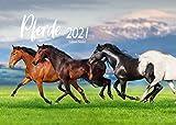 Edition Seidel Pferde Premium Kalender 2021 DIN A3 Wandkalender Pferdekalender Tiere Natur