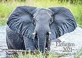 Edition Seidel Elefanten Premium Kalender 2021 DIN A3 Wandkalender Tiere Afrika
