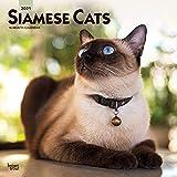 Siamese Cats - Siam-Katzen 2021 - 16-Monatskalender: Original BrownTrout-Kalender [Mehrsprachig] [Kalender] (Wall-Kalender)