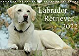 Labrador Retriever 2022 (Wandkalender 2022 DIN A4 quer)