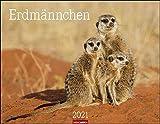 Erdmännchen Kalender 2021