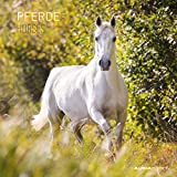 Pferde 2022 - Broschürenkalender 30x30 cm (30x60 geöffnet) - Kalender mit Platz für Notizen - Horses - Bildkalender - Wandplaner - Pferdekalender