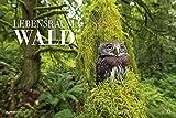Lebensraum Wald 2022 - 49,5x33 cm - Forest - Landschaft - Natur - Wand-Kalender - Alpha Edition