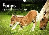 Ponys, die starken Persönlichkeiten (Wandkalender 2021 DIN A4 quer)
