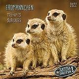 Meerkats/Erdmännchen 2022: Kalender 2022 (Artwork Media)