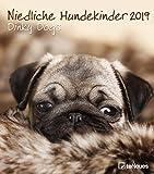 Niedliche Hundekinder 2019 - Broschürenkalender, Hundekalender, Tierkalender 2019 - 30 x 34 cm: Wandkalender Hunde