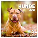 Hunde Wandkalender 2021 Kalender, Broschürenkalender mit Monatskalendarium, Broschurkalender Tierkalender 30 x 30 cm (30x60 Geöffnet)