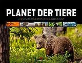 Planet der Tiere, Lebensräume rund um den Globus, Kalender 2021, Wandkalender im Querformat (54x42 cm) - Hochwertiger Tierkalender, Wildtiere