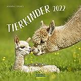 Tierkinder 2022: Broschürenkalender mit Ferienterminen. Babys von Tieren in süßen Bildern. 30 x 30 cm