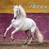 Horses 2022: Broschürenkalender mit Ferienterminen. Pferde und Ponys. 30 x 30 cm