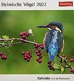 Heimische Vögel Postkartenkalender 2022 - Tischkalender mit Wochenkalendarium - 53 perforierte Postkarten zum Heraustrennen - zum Aufstellen oder Aufhängen - 16 x 17,5 cm: Kalender mit 53 Postkarten