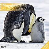 Pinguine 2021, Wandkalender / Broschürenkalender im Hochformat (aufgeklappt 30x60 cm) - Geschenk-Kalender mit Monatskalendarium zum Eintragen