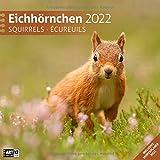 Eichhörnchen 2022, Wandkalender / Broschürenkalender im Hochformat (aufgeklappt 30x60 cm) - Geschenk-Kalender mit Monatskalendarium zum Eintragen
