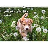 Welpenzauber DIN A3 Kalender für 2021 Hunde Welpen - Seelenzauber