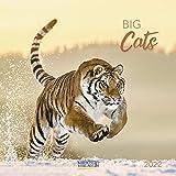 Big Cats 2022: Broschürenkalender mit Ferienterminen. Bilder von Raubkatzen. 30 x 30 cm