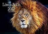Edition Seidel Löwen & Co. Premium Kalender 2022 DIN A3 Wandkalender Tiere Afrika Löwen Tiger