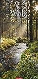 Im Wald XL-Kalender 2022 - Vertikal-Kalender - Wandkalender mit Schmuck-Kalendarium - 12 Farbfotos - 33 x 68 cm