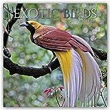 Exotik Birds - Exotische Vögel 2022 - 16-Monatskalender: Original Gifted Stationery-Kalender [Mehrsprachig] [Kalender] (Wall-Kalender)