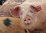 Der Schweinekalender (Wandkalender 2022 DIN A2 quer)