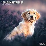 Golden Retriever 2021 Traditioneller Kalender