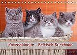 Katzenkinder Britisch Kurzhaar (Tischkalender 2022 DIN A5 quer)