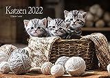 Edition Seidel Katzen Premium Kalender 2022 DIN A3 Wandkalender Katzenkalender