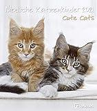 Niedliche Katzenkinder 2021 - Wand-Kalender - Tier-Kalender - 30x34: Cute Cats