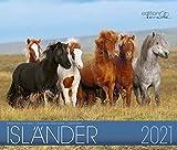 Isländer 2021: Isländer Pferde