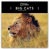 Big Cats - Raubkatzen - Löwen - Tiger - Geparden - Leoparden 2021: Original Carousel-Kalender [Mehrsprachig] [Kalender] (Wall-Kalender)
