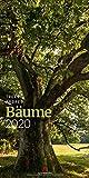 Bäume 2020, Wandkalender im Hochformat (33x66 cm) - Landschaftskalender / Naturkalender mit Monatskalendarium