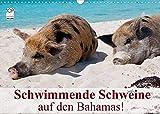 Schwimmende Schweine auf den Bahamas! (Wandkalender 2022 DIN A3 quer)