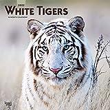 White Tigers - Weiße Tiger 2022 - 16-Monatskalender: Original BrownTrout-Kalender [Mehrsprachig] [Kalender] (Wall-Kalender)