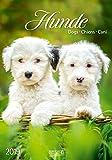 Gr. farbiger Hundekalender 219819 2019