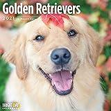 Bright Day 2021 Golden Retrievers Wandkalender 30,5 x 30,5 cm, süßer Hund Welpe