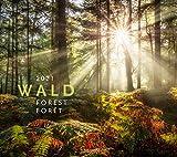 Wald Kalender 2021, Wandkalender im Querformat (54x48 cm) - Landschaftskalender / Naturkalender