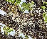 Big Cats 2022: Großer Wandkalender. Foto-Kunstkalender mit eindruckvollen Aufnahmen von Raubkatzen. Querformat 55 x 45,5 cm.