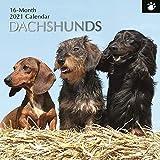 2021 Wandkalender - Dackel Kalender, 30 x 30 Zentimeter Monatsansicht, 16-Monat, Hunde und Haustiere Thema, Enthält 180 Aufkleber auf Englisch