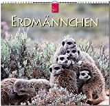 ERDMÄNNCHEN: Original Stürtz-Kalender 2018 - Mittelformat-Kalender 33 x 31 cm