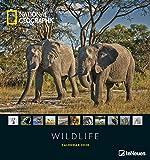 National Geographic Wildlife 2020 - Posterkalender - 45x48cm - Tierkalender - atemberaubende Fotografie