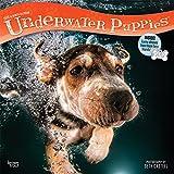 Underwater Puppies – Welpen unter Wasser 2019 - 16-Monatskalender (Wall-Kalender)