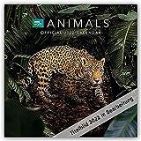 BBC Animals – Wildtiere 2022: Original Danilo-Kalender [Mehrsprachig] [Kalender] (Wall-Kalender)