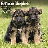German Shepherd Puppies - Deutsche Schäferhunde - Welpen 2022 - 16-Monatskalender: Original Avonside-Kalender [Mehrsprachig] [Kalender]: Original ... [Mehrsprachig] [Kalender] (Wall-Kalender)