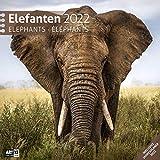 Elefanten 2022, Wandkalender / Broschürenkalender im Hochformat (aufgeklappt 30x60 cm) - Geschenk-Kalender mit Monatskalendarium zum Eintragen