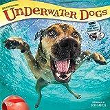 Underwater Dogs – Hunde unter Wasser 2019 - 18-Monatskalender (Wall-Kalender)