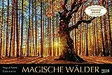 Magische Wälder 2022: Großer Foto-Wandkalender mit Bildern aus bunten Wäldern. Edler schwarzer Hintergrund. PhotoArt Panorama Querformat: 58x39 cm.