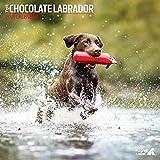 Labrador Chocolate 2021 Traditioneller Kalender, 9607