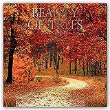 Beauty of Trees – Die Schönheit der Bäume 2022 – 16-Monatskalender: Original Gifted Stationery-Kalender [Mehrsprachig] [Kalender] (Wall-Kalender)