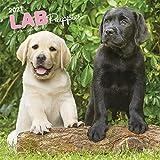 Labrador Retriever Puppies - Labradorwelpen 2021 - 16-Monatskalender mit freier DogDays-App: Original BrownTrout-Kalender [Mehrsprachig] [Kalender] (Wall-Kalender)
