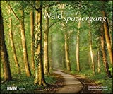 Waldspaziergang 2022 – Fotokunst-Kalender – Querformat 58,4 x 48,5 cm – Spiralbindung